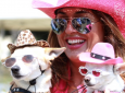 Woofstock 90210 Pet Extravaganza