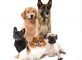 Pups & Pints