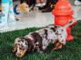 Tully's Puppy Preschool (DTLA)