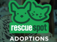 Pacific Pup Rescue (West Hollywood)