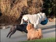 Bluff Creek Dog Park