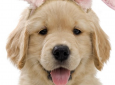 Easter Bunny Photos With You Dog