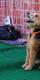 Tully's Puppy Preschool (Downtown LA)