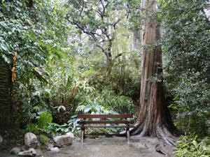 Genial Mildred E. Mathias Botanical Garden