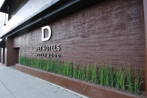 D pet hotels los angeles hollywood hollywood los angeles for Dog hotels los angeles