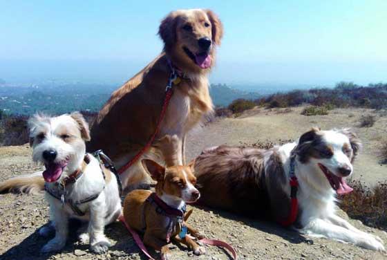 Fitdog sports club los angeles los angeles for Dog boarding santa monica