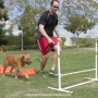 feet and paws fitness_play around with your hound