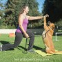 feet and paws fitness_workout with your dog_tracy and berlin