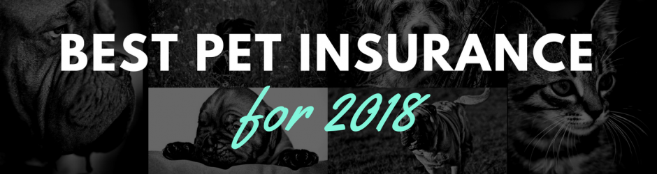 Best of Pet Insurance