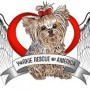 Yorkie Rescue of America