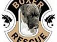 Boxer Rescue LA